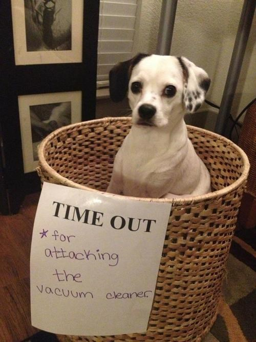 Small dog in a time out basket, with a note that says he's in time out for attacking the vacuum cleaner