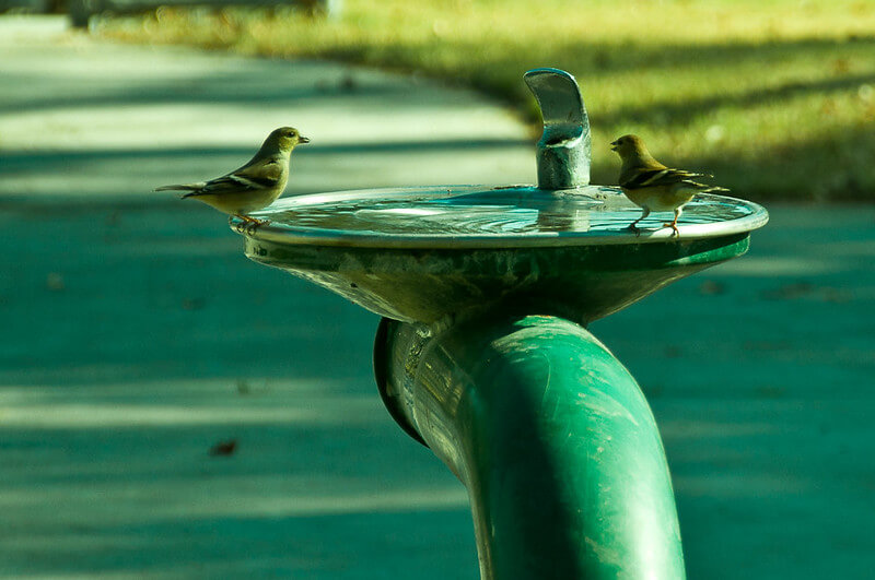 Image of birds sitting around a water fountain.