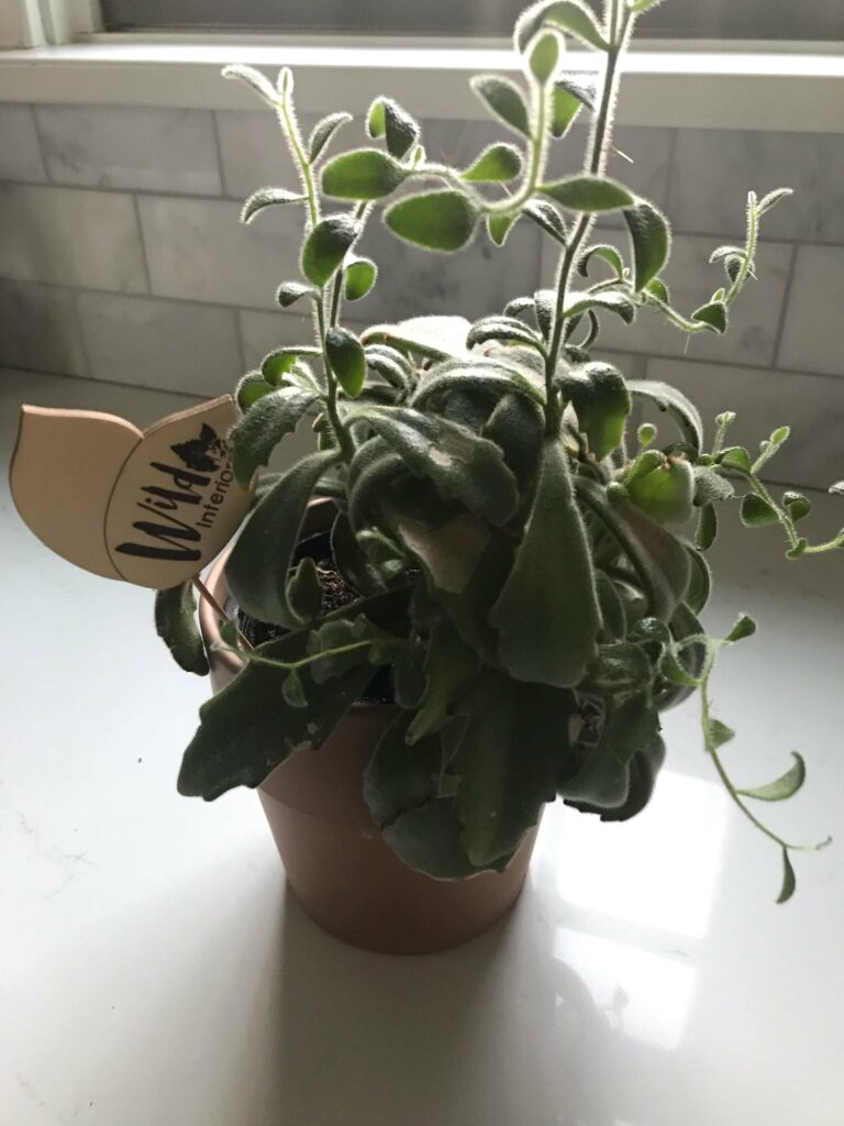 Photo of a potted plant in front of a tile backdrop.