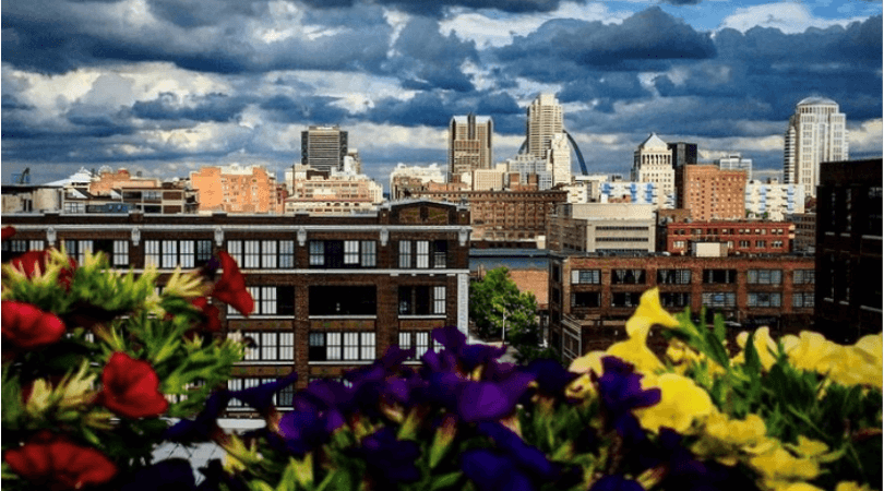 Photo of the St. Louis skyline, with businesses in focus and greenery close to the lens.