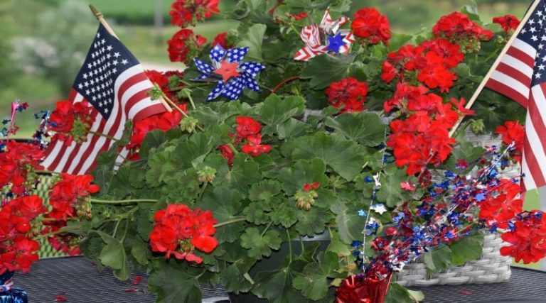 Photo of small American flags and patriotic decorations adorning a plant.